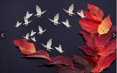 Осенние листья и белые бабочки