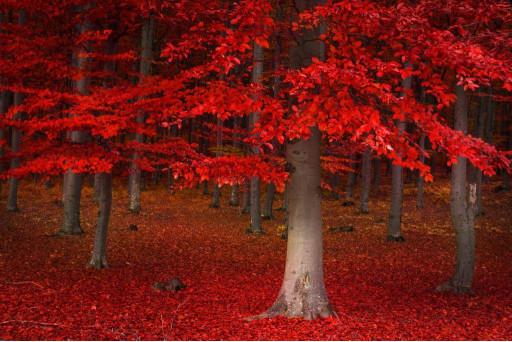 Деревья в красных листьях
