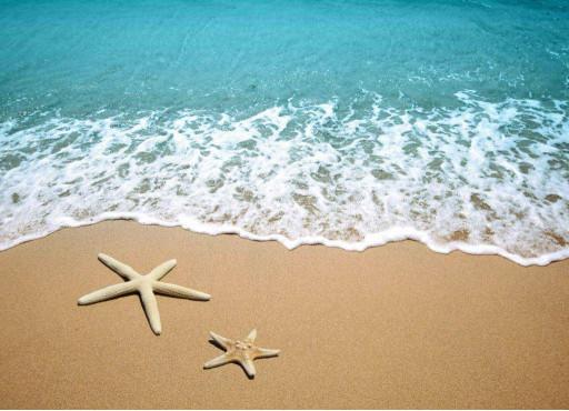 Морские звёзды