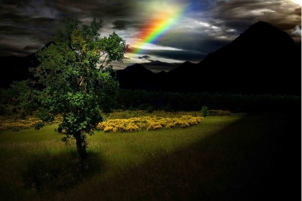 Дерево и радуга
