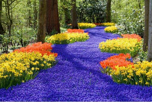 Поле цветов в лесу