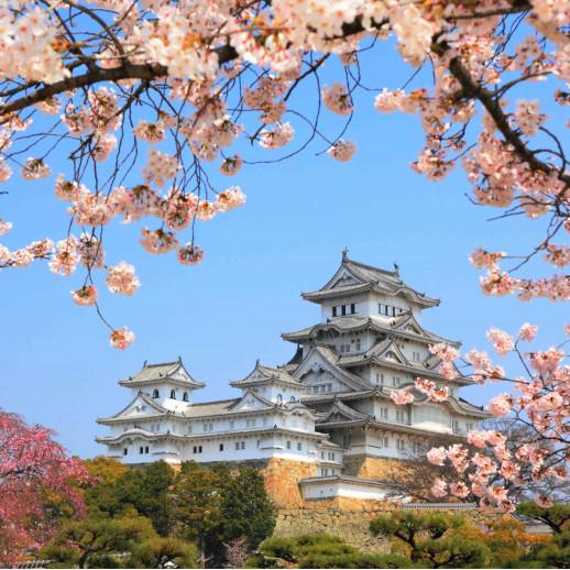 Китайский храм и сакура
