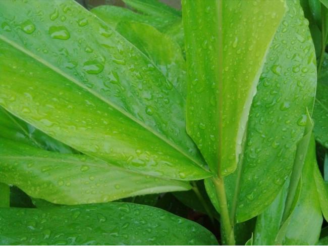 Мокрые листья