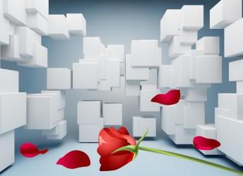 Белые кубы и красная роза