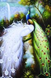Белый и цветной павлин