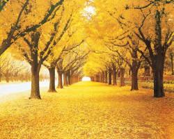 Осенняя алея