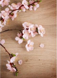 Весенний расцвет