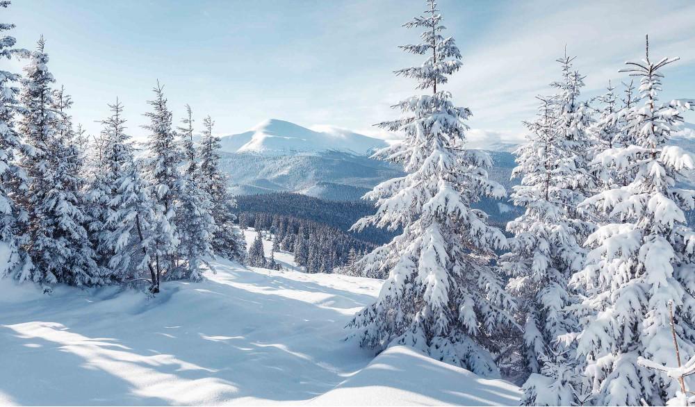 Заснеженные горы и лес